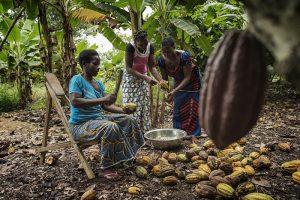 donne piantagione cacao